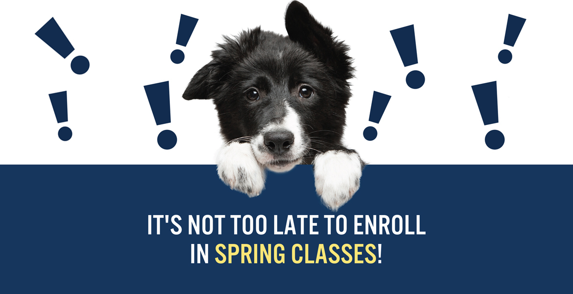 Photo of dog with text It's not too late to enroll in spring classes
