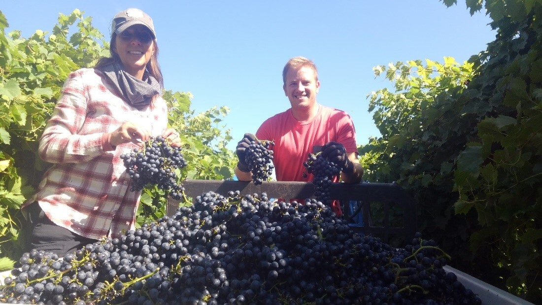 female and male student holding bunches of grapes, in vineyard, outside
